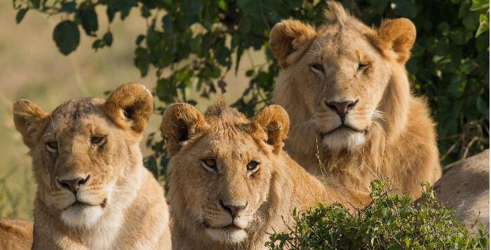 Overvejer du at gå ind i Løvens Hule? Tænk dig grundigt om først