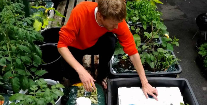 Urban gardening: Startuppet TagTomat vil fremme grønne fællesskaber