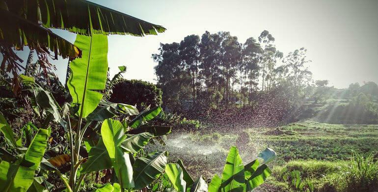 Tidligere CTO i Nemlig.com satser på urban farming i Nairobi
