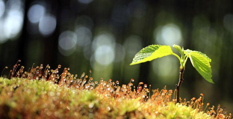 Konsulent: Grønne virksomheder glemmer, at de skal tjene penge