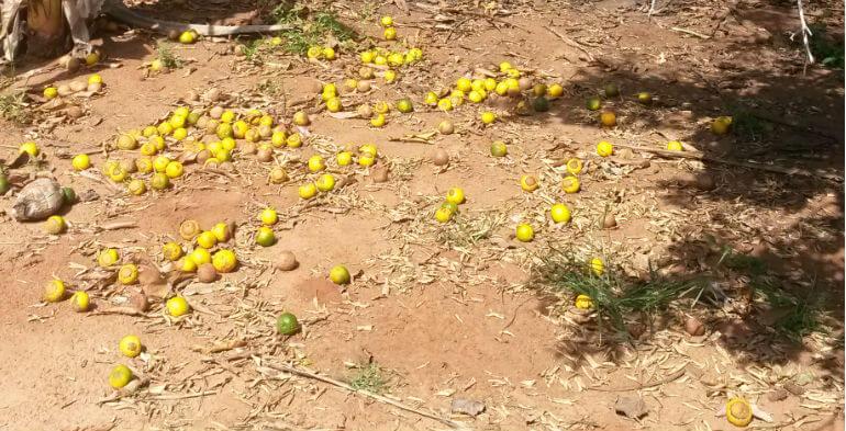 Simpelt men genialt: En konserveringspose til frugt skal reducere sult
