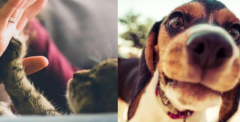 Dyrepasningssite satser på folks frivillighed for at sikre tryghed