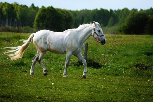 Jysk webshop har specialiseret sig i online-salg af rideudstyr