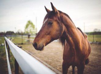 Webshop sælger hesteudstyr til lavpris – Sådan plejer du din hest