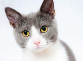 Webshop tilbyder udstyr til kæledyr: Sådan giver du din kat et godt liv