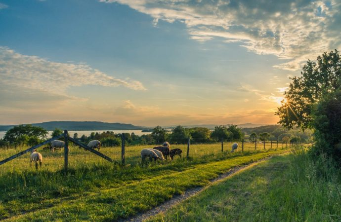 3 grunde til at flytte ud på landet