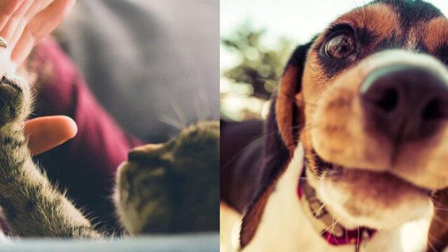 Petspot, dyrepasningssite